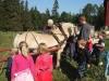 spenner-hesten-for-potetopp